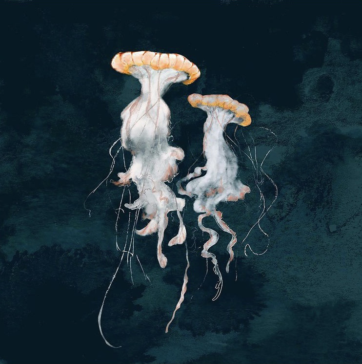 jellyfish digital drawing
